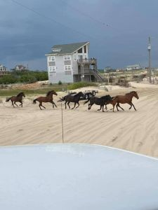 Bob's Corolla Wild Horse Tours photo